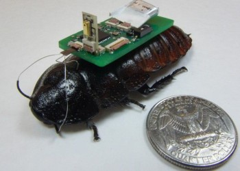 Cyborg Cockroaches as Little Rescuers?