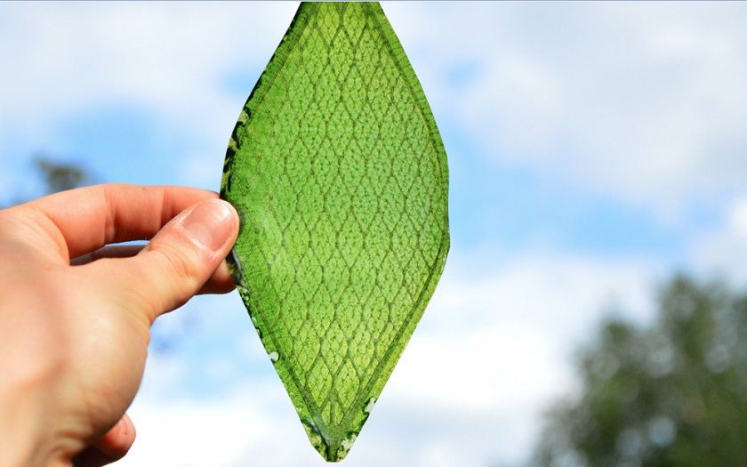 World's First Synthetic Biological Leaf Could Help Astronauts Breathe in Space