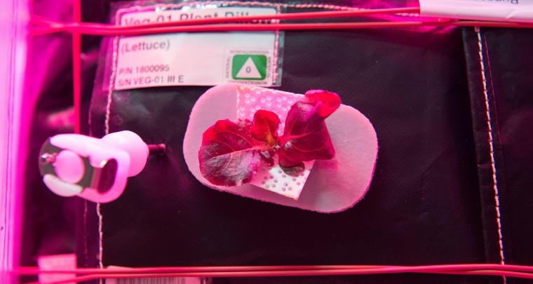 NASA Astronauts Ate Space Grown Veggies on International Space Station for the first time
