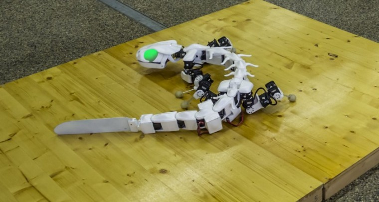 Don't be Scared, it's just a Green Eyed Salamander Robot