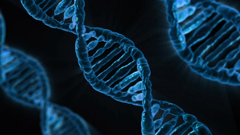familial DNA searching