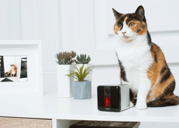 Pets will now get Extra Love from any Remote Corner with Petcube Play