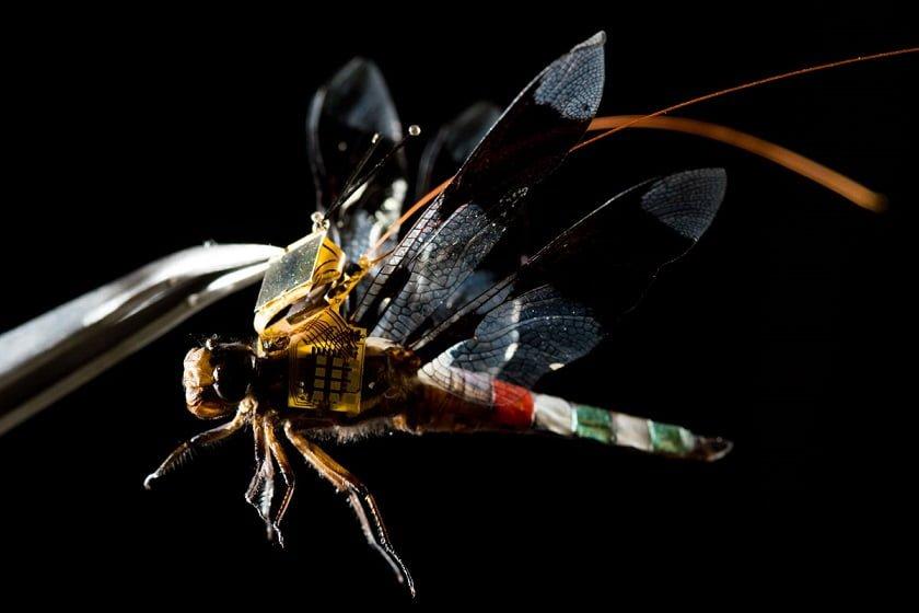 Cyborg-Dragonfly