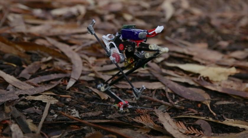 Salto robot