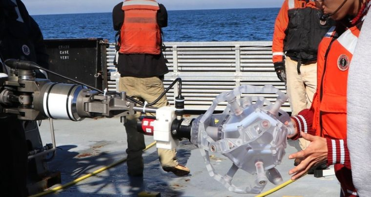 A Marine Robot Catches Delicate Ocean Creature Harmlessly