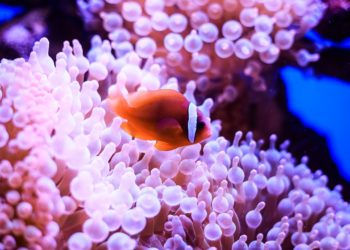 How Undersea Robots Are Helping Humans in Saving the Great Barrier Reef